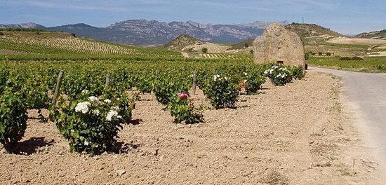 Rioja_Landschaft.jpg