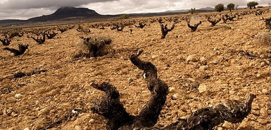 Yecla_Alicante_Landschaft.jpg
